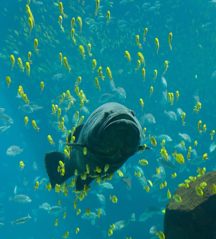 fishery and aquaculture projec topics and material PDF